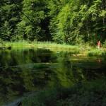 Озеро та урочище Лебедин