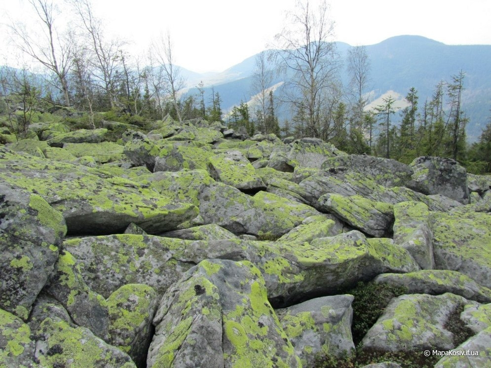На гору Ротило — найвищу вершину Покутсько-Буковинських Карпат