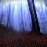 Вечірній ліс