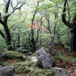 Ліс на хребті Каменистому