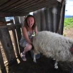 Ніколь вчиться доїти овечку