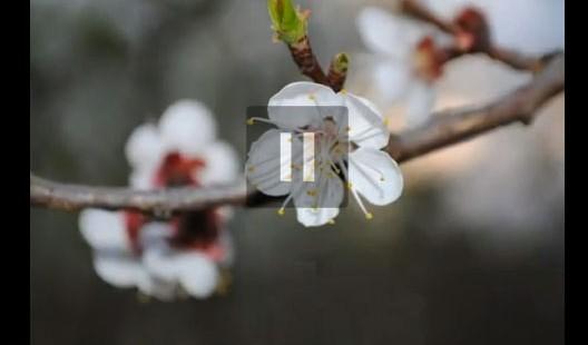 Прийшла весна в Косів (відео)