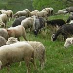 Яворівська мандрівка «Від вівці — до ліжника»