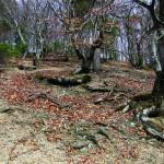 Химерні дерева на Голиці