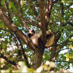 Кицька на дереві